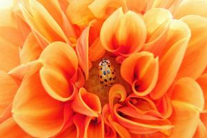 EL COLOR NARANJA: Sus Tipos, Variedades y Tonalidades. El Anaranjado Oscuro, Quemado, Tono Melón, Bermellón, Zanahoria y Mandarina.